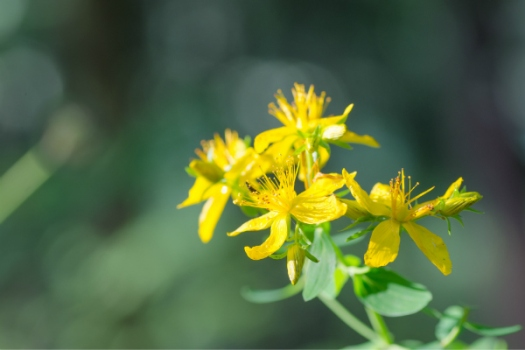 St John's Wort can cause same adverse reactions drugs