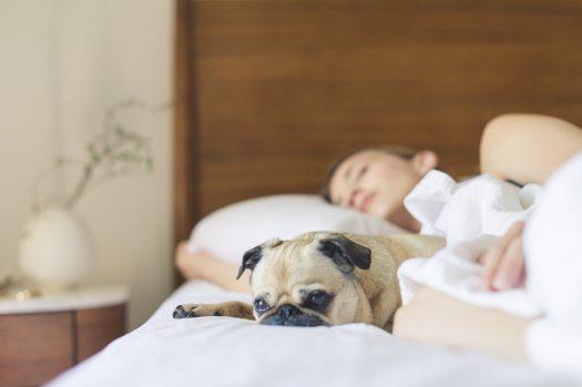 bed-bedroom-cute-dog-545016